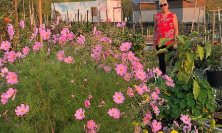 IDS: bilan du jardin communautaire