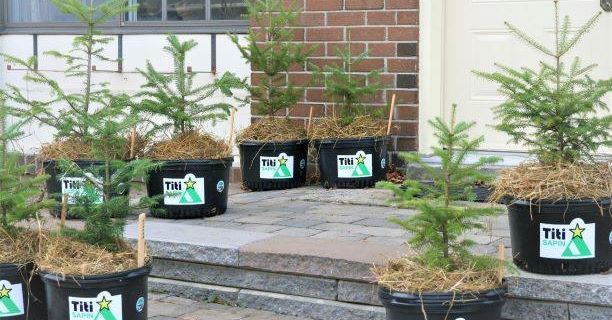 Noël 2020: adoptez un « Titi Sapin» écologique