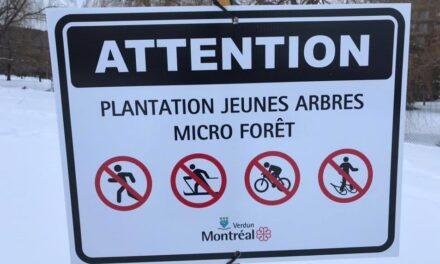 Attention, plantation d'arbres