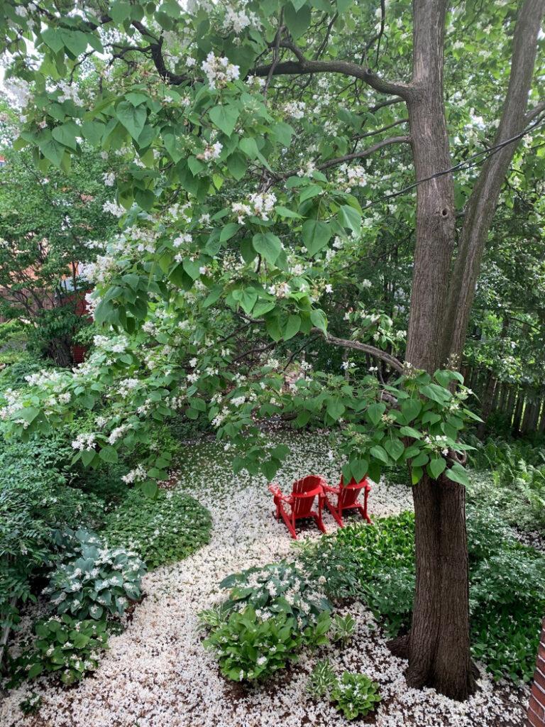 4a-Tapis-de-fleurs-sur-la-rue-Willibrord-de-Ann-Gu